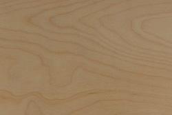 Phenolic Birch (Betula pendula)