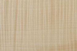 Maple (acer pseudoplatanus)