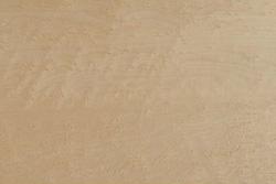Birdseye Maple (Acer saccharum Marsh)