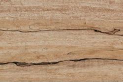 Spalted Maple (Acer saccharum Marsh)
