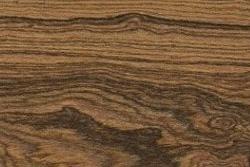 Bocote (Cordia eleagnoides)
