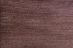 Katalox (Swartzia cubensis)