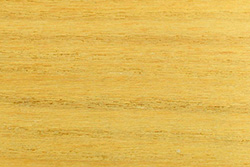 Mulberry Wood (Morus alba)