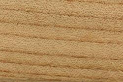 Elm Wood (Ulmus minor)